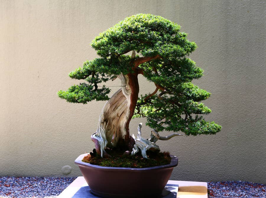 These Floating Bonsai Trees Look Like Actual Magic