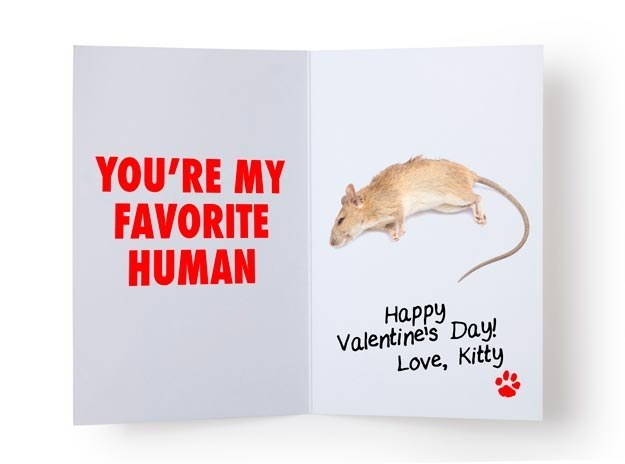 14 Valentine's Day Cards You Could Only Get From Your Cat