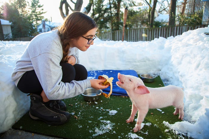 Catherine Smith, age 12, feeds Wee Wee the piglet in Chevy Chase, Maryland. Smith and her family rescued the piglet during Winter Storm Jonas and cared for him at their home for several days before taking him to Poplar Spring Animal Sanctuary in Poolesville, Maryland.