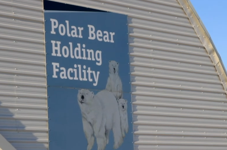 The polar bear jail