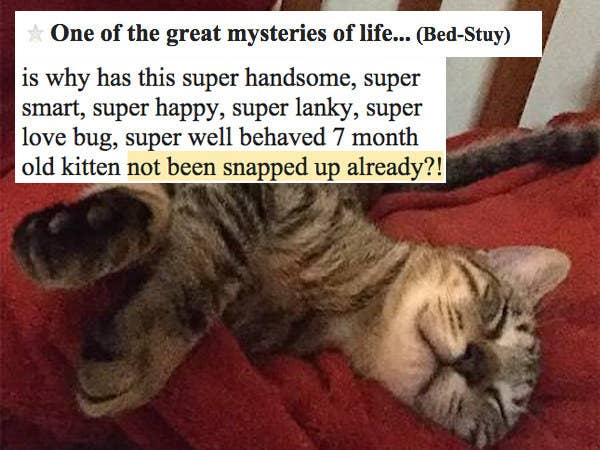 17 Cats On Craigslist That Will Make You Go