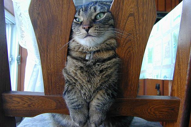 El gato gordo - 3 part 4