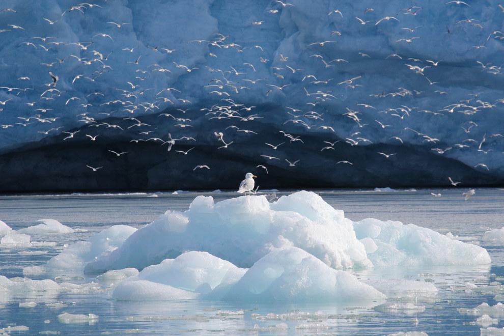Svalbard -- Noruega