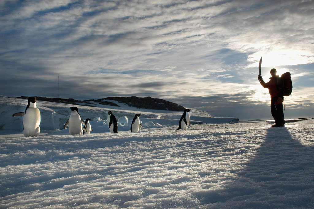 A Giant Iceberg May Have Killed 150,000 Penguins In Antarctica