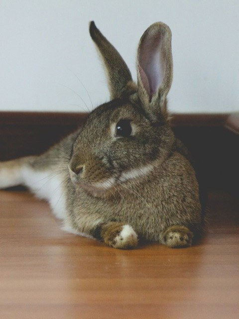 Check out this chunky little bunny, practically begging you to smile.