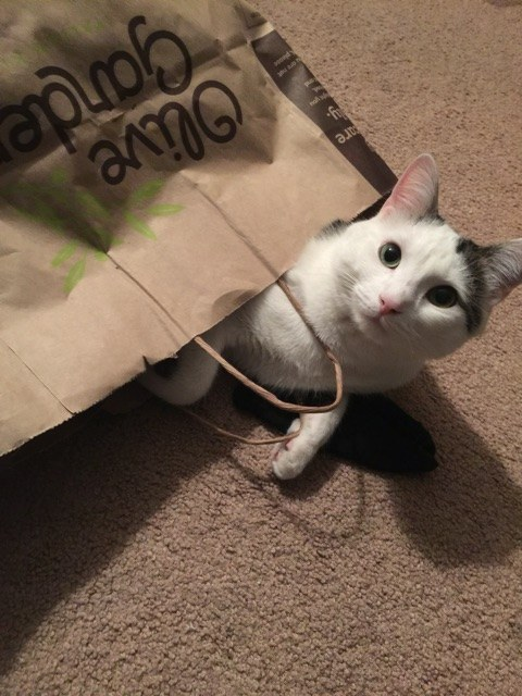 Or a cat having a grand ol' time in a paper bag.