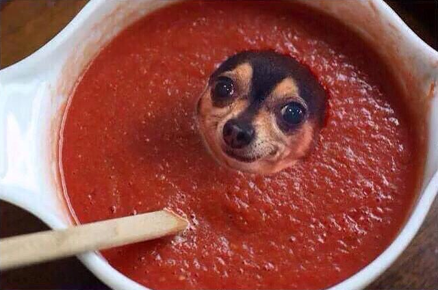 Can Your Dog Have Tomato Soup