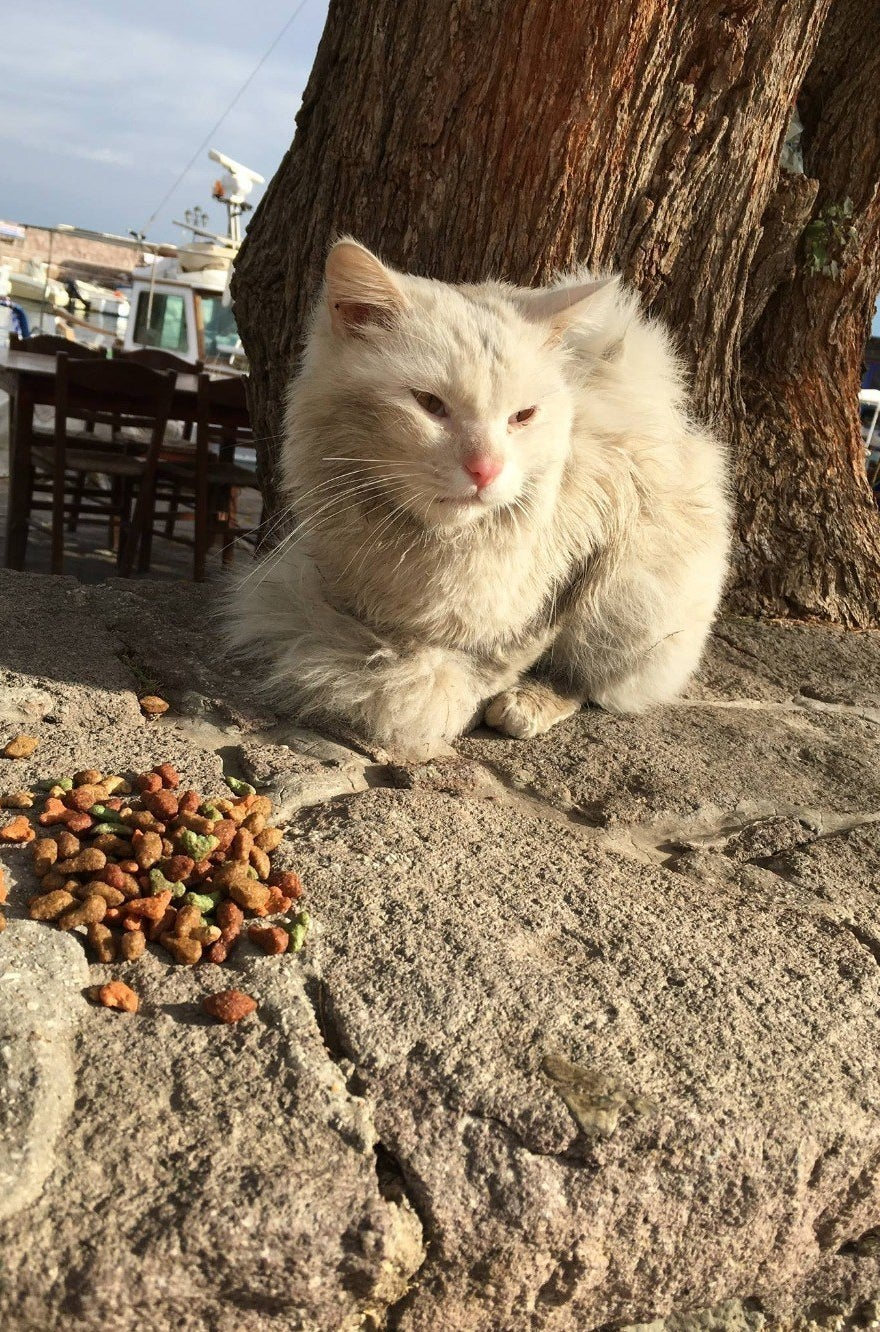This Cat Has Been Reunited With The Refugee Family He Lost