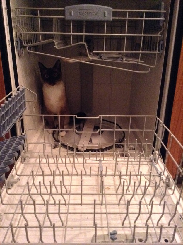 The dishwasher. That's for sitting in.