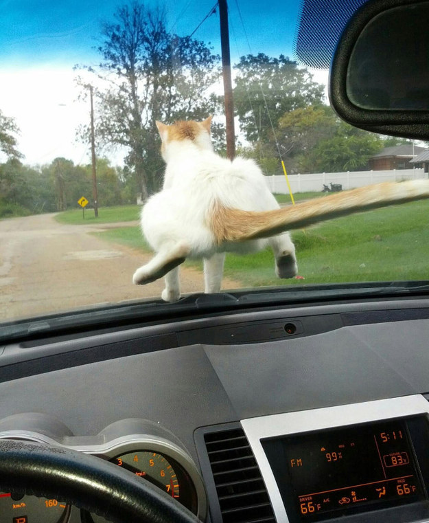 They'll sit on your windshield.