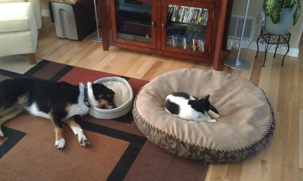 Everything is a cat bed, except for actual cat beds.