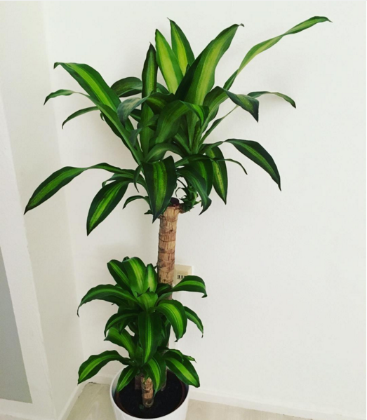 Plant In Home 15 Beautiful House Plants That Can Actually Purify Your Home