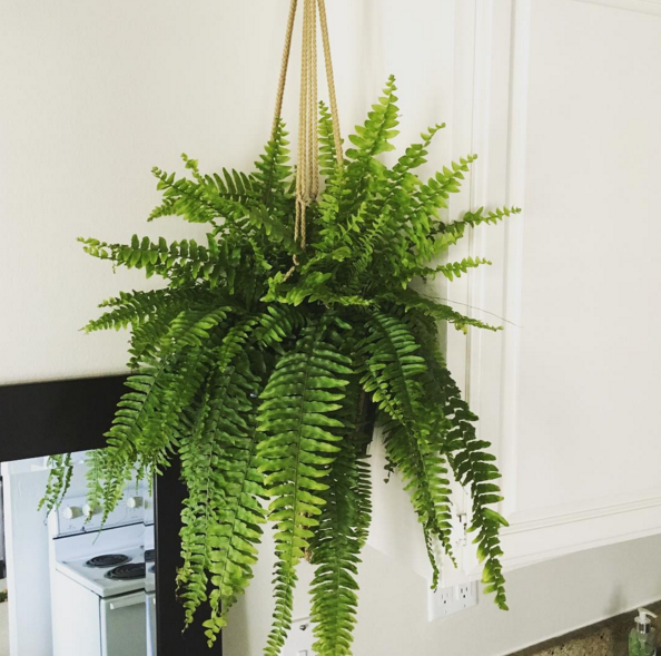 15 beautiful house plants that can actually purify your home. Black Bedroom Furniture Sets. Home Design Ideas
