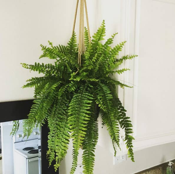 Best indoor plants 7 picks 20 indoor plants that can improve your office environment 14 hardy - Plants can improve ambience home ...