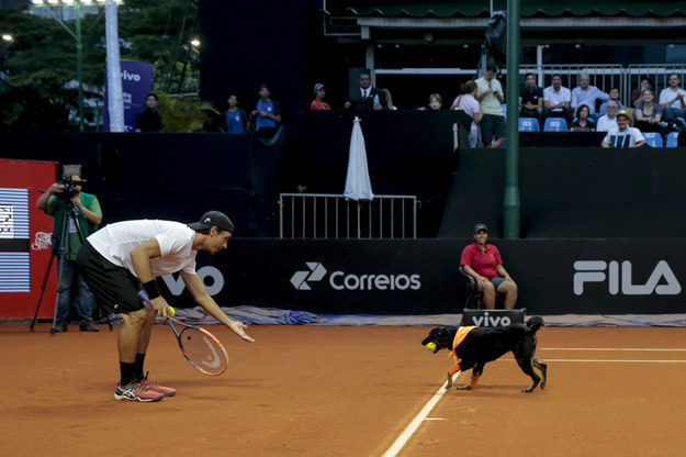 The dogs, rescued from shelters in São Paolo, were trained up to take part in an exhibition tennis match on Thursday between Spain's Roberto Carballes Baena and Portugal's Gastao Elias.