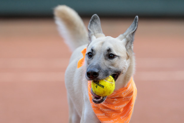"""We want to show that abandoned dogs can be adopted and trained,"" Andrea Beckert, a trainer from the Association of Animal Wellbeing, told CNN. ""After all, it's not easy to get a dog to only pick up the lost balls, and then to give them up!"""