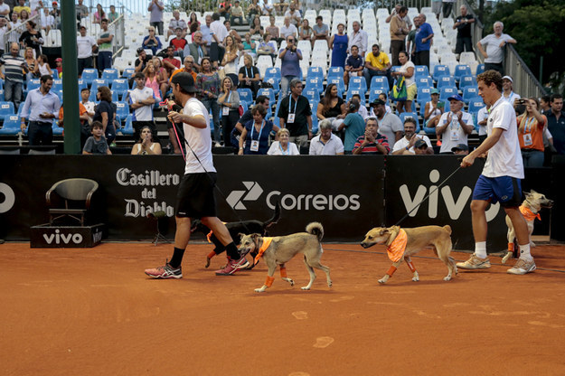 "Four Brazilian stray dogs were given a new lease on life when they were trained to be ""ball dogs"" for the Brazil Open."