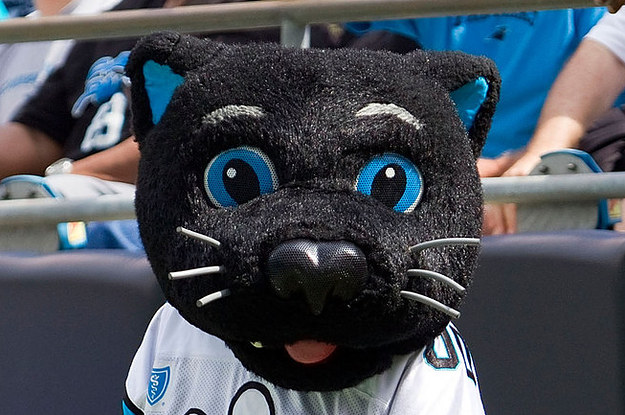 7432bc20f The Carolina Panthers Mascot Is Absolutely Purrfect