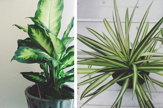 15 beautiful house plants that can actually purify your home Beautiful plants for home