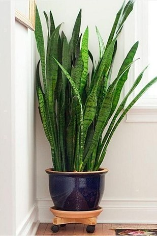 15 beautiful house plants that can actually purify your home buzzfeed news - Plants for inside the house ...
