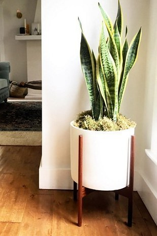 15 beautiful house plants that can actually purify your for Buy air purifying plants