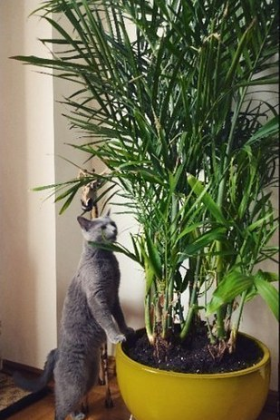 15 beautiful house plants that can actually purify your home buzzfeed news - Pretty indoor plants ...