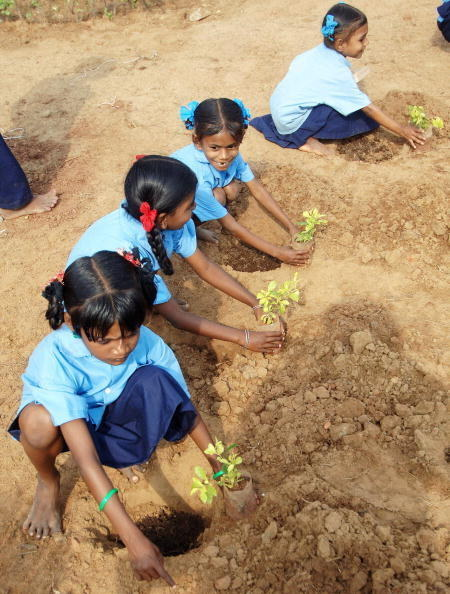 And children orphaned by the tsunami plant trees in their parents' memory.