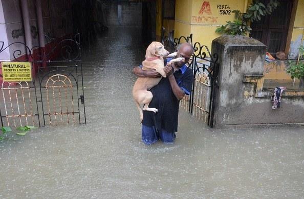 A man rescues his best friend.