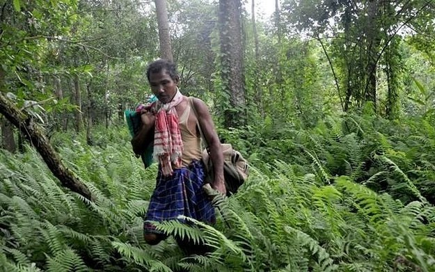 Molai is a 1,360 acre forest in Assam that was planted singlehandedly by one man. LITERALLY.