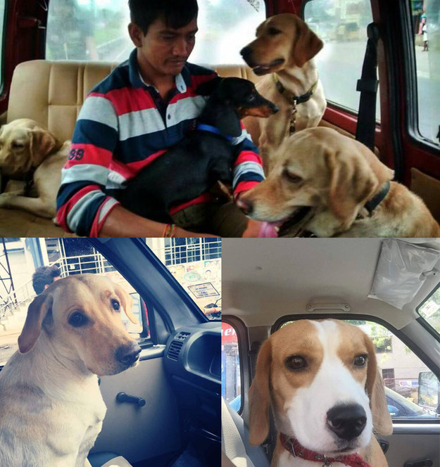 An NGO shuttles dogs to Bangalore to keep them safe and dry through Chennai's floods.