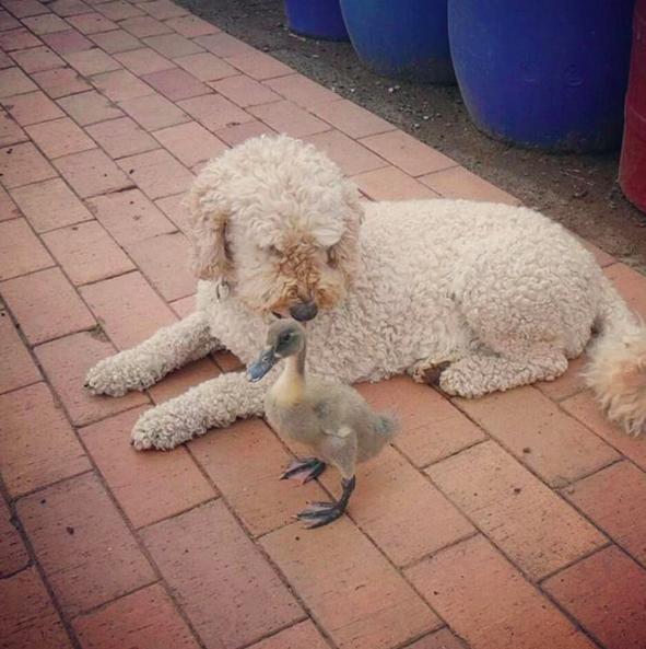 These quack-ups.