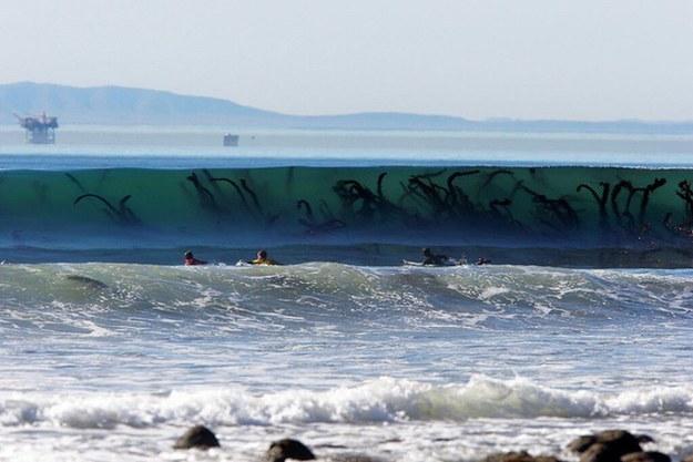 Y estas son solo algas... ¿verdad?