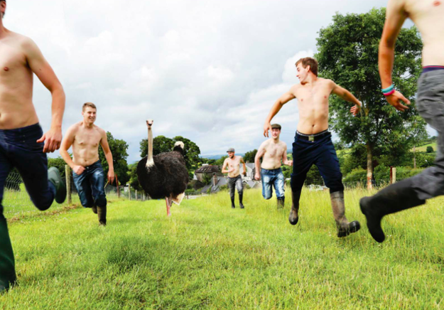 And shirtless Irish farmers frolicking in a field alongside an ostrich?