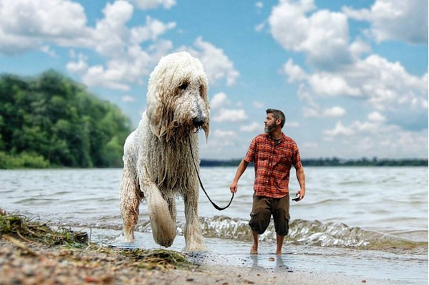 This Dog's Larger Than Life Photos Have Made Him An Instagram Sensation
