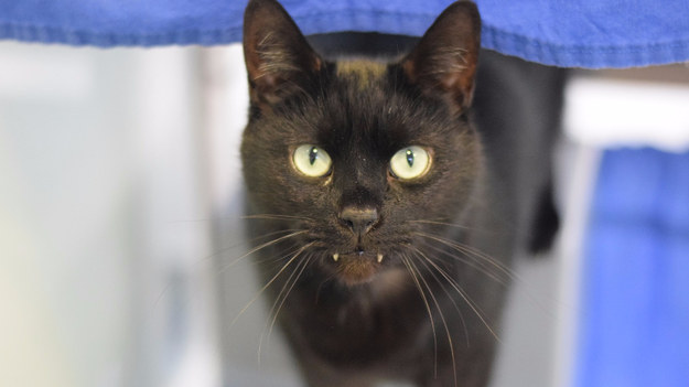 "The 4-year-old cat is unique because he has ""the most excellent front fangs that poke right out,"" the group said."