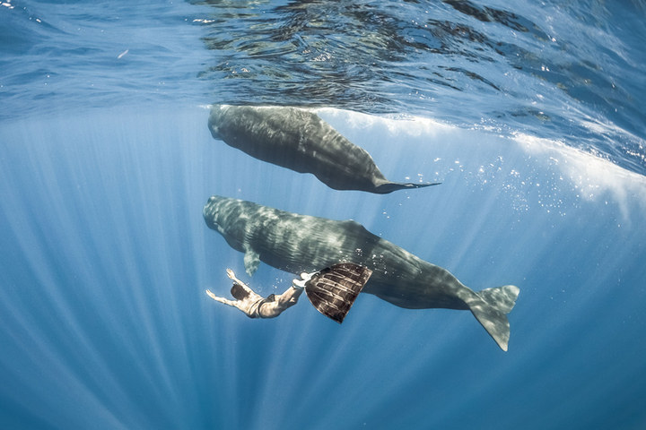 The pics were taken by her friends Alex Voyer and Alex Roubaud, a duo from Paris who specialise in photographing the wonders of the deep under the name Fish Eye.