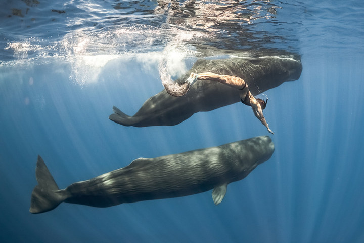 They feature stunning images of sperm and blue whales, along with French freediver Marianne Aventurier.