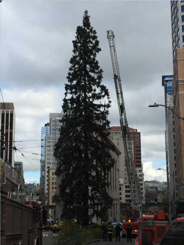 Seattle police received reports shortly after 11 a.m. PT on Tuesday that a man had climbed the tree, according to a statement released by the Seattle Police Department. The cops have since been leading rescue efforts to coax the man down.