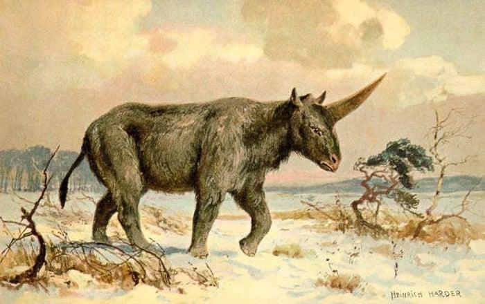 Siberian unicorn.