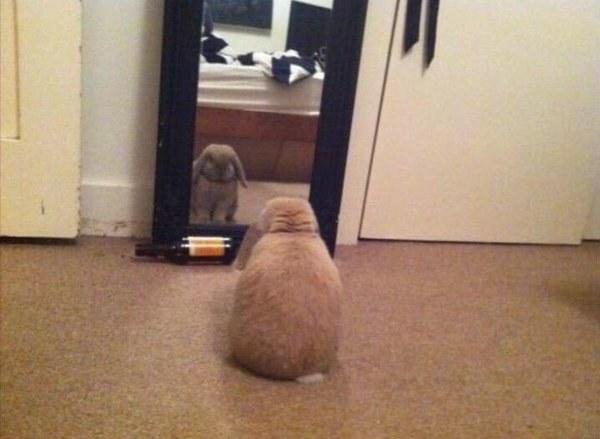 Cuando te agobias porque después de varias semanas te miras al espejo y crees que no has perdido nada.