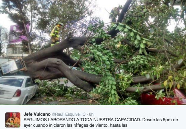 Las autoridades locales han estado trabajando para remover los árboles caídos.