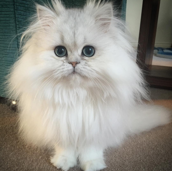 These Cats Are So Fluffy They Don't Look Real