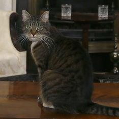 Freya the chancellor's cat
