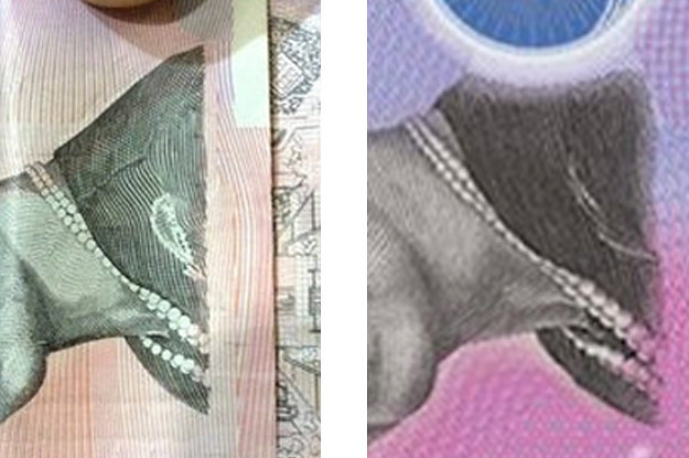 Dont Worry Australia, The New 5 Note Still Looks Like A Sad Whale Sucking A Dick-8347