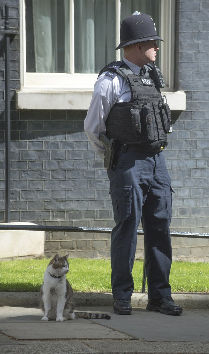 Larry sits beside a police officer outside 10 Downing Street