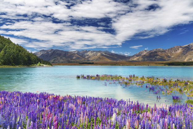 12. New Zealand
