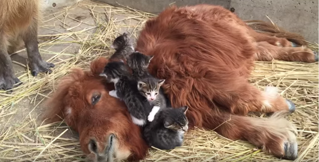 Does this look like a bunch of adorable wittle kittens viciously mauling a pony with their cuteness? BECAUSE YES, THAT APPEARS TO BE HAPPENING.