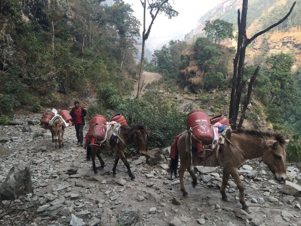 The trails that go in and out of Uiya are the only route for villagers to get daily supplies. Some of the villagers in the remote hamlets in northern Gorkha are forced to walk for up to 10 days to get to the nearest market.
