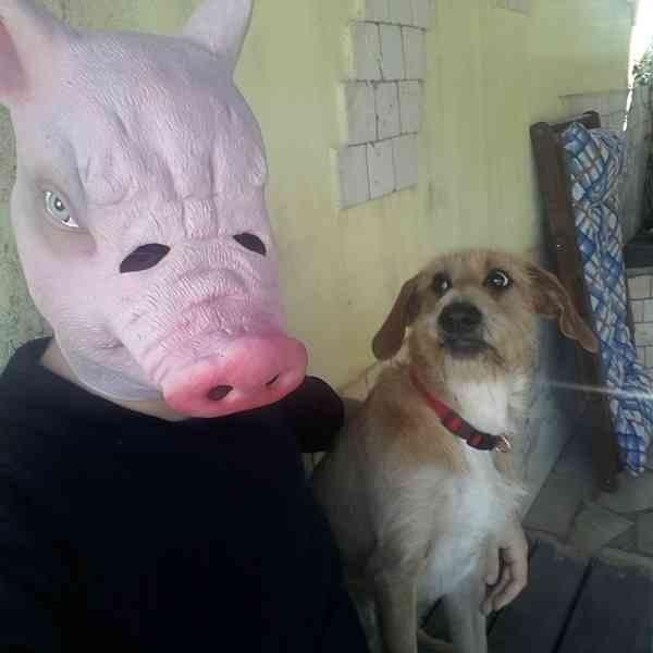Oink, oink: