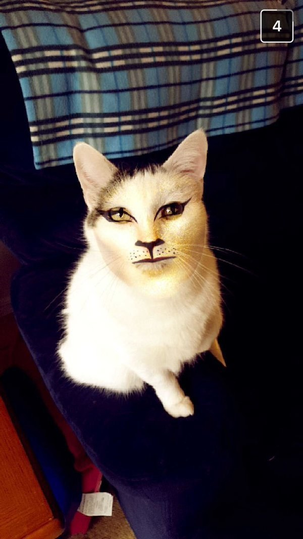 This very serious cat: